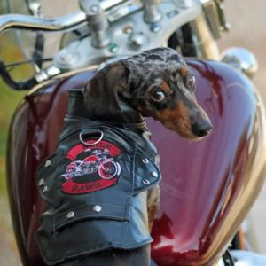 biker-dawg-motorcycle-dog-jacket-black-5490