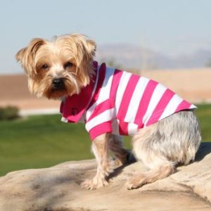 striped-dog-polos-pink-yarrow-white-4593